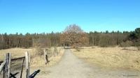 2014-03-12-dsc00196-eiche-klein