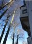 2012-12-30-grunewaldsee-jagdschloss-paulsborn-060-klein