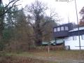 2005-eiche-grosse-steinlankecimg6003-klein