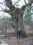 Bäume - Eichen - Galerie 1 - Große Steinlanke