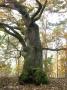 2009-cimg5497-klein