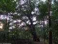 Bäume - Eichen - Galerie 2 - Dachsbergeschlucht