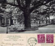 Bäume - Eichen - Galerie 5 - Pichelswerder