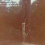 Bäume - Eichen - Galerie 6 - Postfenn - Blitzbaum
