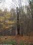 2005-11-13-blitzbaum-5-klein