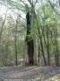 2009-04-14-cimg1095-klein