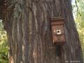 Bäume - Eichen - Galerie 9 - Teufelssee - Ökowerk