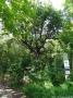 2012-06-29-posfenn-teufelsfenn-dsc-147-klein