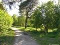 Bäume - Kiefern - Schildhorn