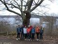 Bäume - Linden - Havelhöhenweg