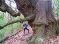 Bäume - Linden - Karlsbergschlucht