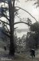 1925-chorfahrt-grunewald-dachsgrund-klein