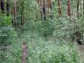 2012-05-27-41-klein