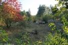 2012-09-16-dalemerfeld-schafe-klein