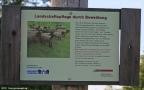 2012-09-16-dalemerfeld-schafeschild-a-klein