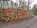 WaldPflege: Dachsberg - Baumfällungen März 2014