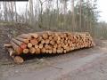 2014-03-17-dachsberg-baumfaellungen-040
