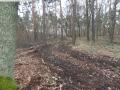 2014-03-17-dachsberg-baumfaellungen-008