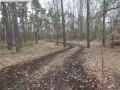 2014-03-17-dachsberg-baumfaellungen-009