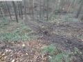 2014-03-17-dachsberg-baumfaellungen-015