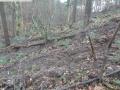 2014-03-17-dachsberg-baumfaellungen-017