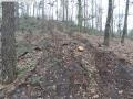 2014-03-17-dachsberg-baumfaellungen-020