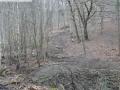 2014-03-17-dachsberg-baumfaellungen-026