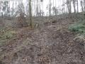 2014-03-17-dachsberg-baumfaellungen-028