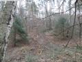 2014-03-17-dachsberg-baumfaellungen-029