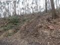 2014-03-17-dachsberg-baumfaellungen-031