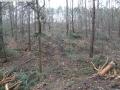 2014-03-17-dachsberg-baumfaellungen-033