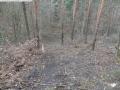 2014-03-17-dachsberg-baumfaellungen-043