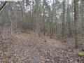 2014-03-17-dachsberg-baumfaellungen-051