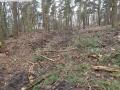 2014-03-17-dachsberg-baumfaellungen-061