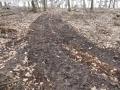 2014-03-17-dachsberg-baumfaellungen-093