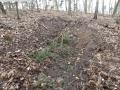 2014-03-17-dachsberg-baumfaellungen-096