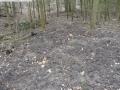 2014-03-17-dachsberg-baumfaellungen-099