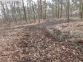 2014-03-17-dachsberg-baumfaellungen-108