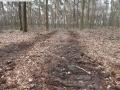 2014-03-17-dachsberg-baumfaellungen-110