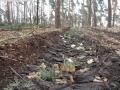 2014-03-17-dachsberg-baumfaellungen-115