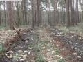 2014-03-17-dachsberg-baumfaellungen-116