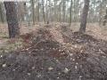 2014-03-17-dachsberg-baumfaellungen-134