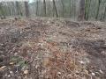 2014-03-17-dachsberg-baumfaellungen-136