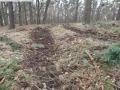 2014-03-17-dachsberg-baumfaellungen-141