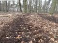 2014-03-17-dachsberg-baumfaellungen-142