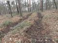 2014-03-17-dachsberg-baumfaellungen-143