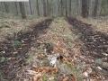 2014-03-17-dachsberg-baumfaellungen-144