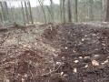 2014-03-17-dachsberg-baumfaellungen-145
