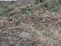 2014-03-17-dachsberg-baumfaellungen-157