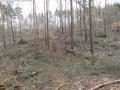 2014-03-17-dachsberg-baumfaellungen-159